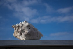 A conch shell that has been removed from the sea now serves as an outdoors deck ornament