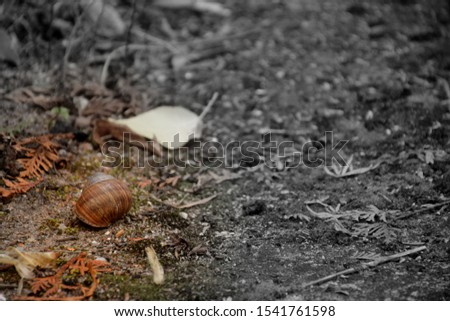 A concrete path fully covered with some dry withered leaves and needles, moss, and debris with a single snail shell laying on its left side seen on a cloudy autumn day on a Polish countryside #1541761598