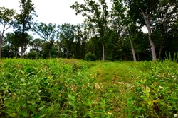 A conical shaped Native American Indian Burial mound located the Lizard Mound County Park in Washington County near West Bend Wisconsin.  The round mound is in an open area of the burial ground site.