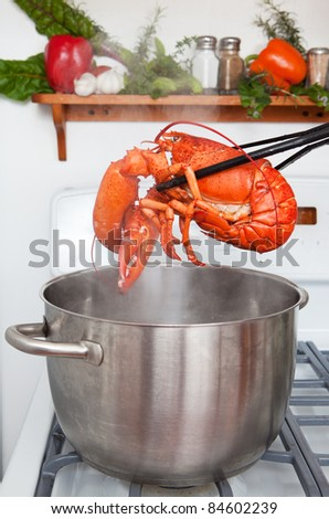 A cooked lobster being lifted from a pot in the kitchen.