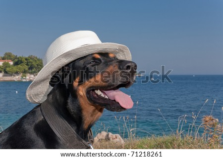 a cool dog with a hat is chilling in the sun