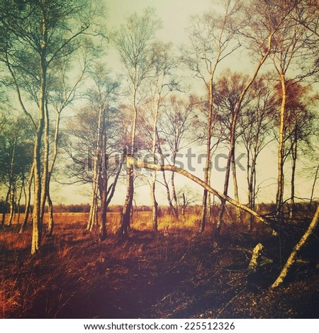 A copse of tall trees in the sunlight surrounding one tree which has fallen.