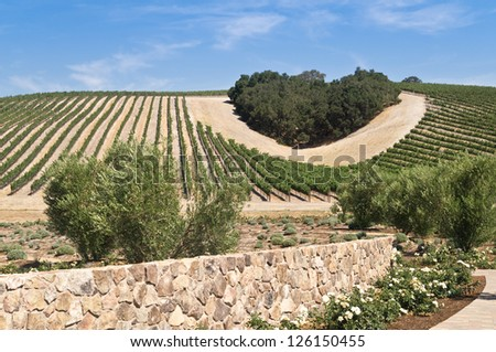 A copse of trees forms a heart shape on the hills of scenic California vineyard growing a variety of fine wine grapes