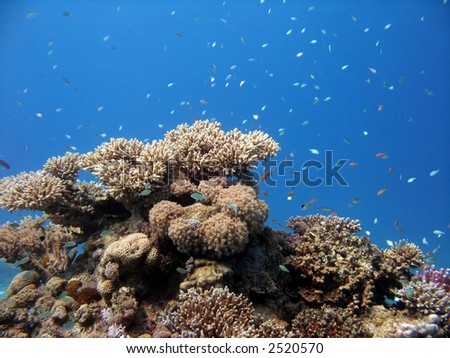 A coral colony