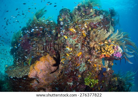 A coral scene from Raja Ampat Indonesia with several small fish around it.  #276377822