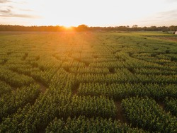 a corn maze in a farm in the countryside during sunset