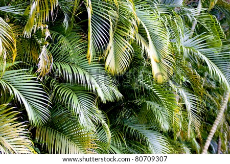 a corner of a palm tree with leaves - stock photo