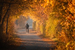 A corridor of autumn trees with yellow leaves. A cyclist rides along an alley in an autumn Park.