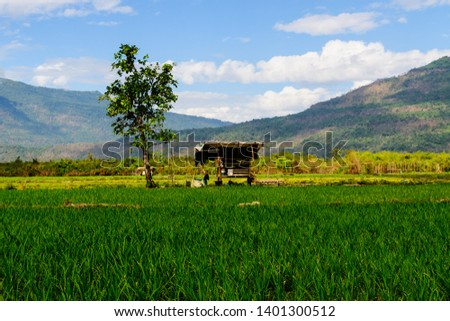 A cottage stay along under shade of alone tree in rice field, a livelihood of the farmer at countryside of Asia spot