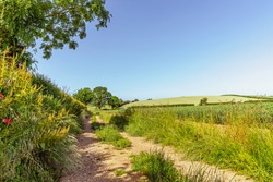 A country lane running between a hedgerow and a field of crops.  There is a hill in the distance and blue sky overhead.