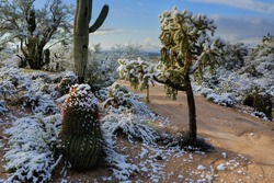 A country road disappears around a corner into the wintry Sonoran Desert near Tucson, Arizona.