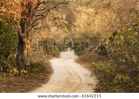 A country road meanders through a sand forest on a game preserve in South Africa. This is a nice pastoral scene of a long and windy path.