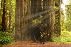 A couple admiring Redwood trees, Redwood National Park, California Nature, USA