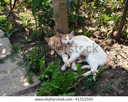 A couple cats having fun in the shadow