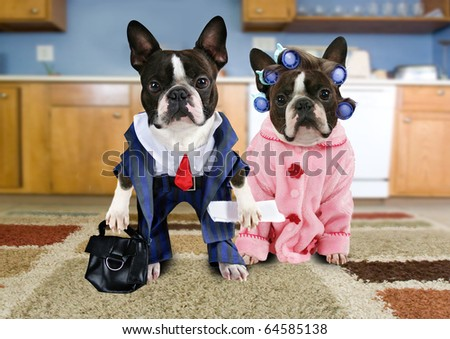 a couple of boston terriers dressed as an old couple
