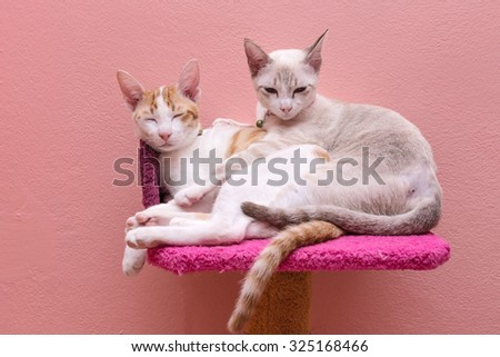 A couple of cats sleeping and hugging on bed.