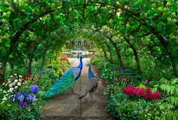 A couple of peacocks walks through a green garden full of irises and hydrangeas under an arched pergola with green apples hanging on it