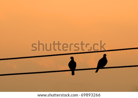 A couple of pigeon on electric cable.