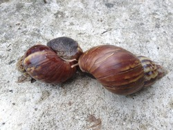 A couple of snail making love on the cement floor. Perfect of love forever concept