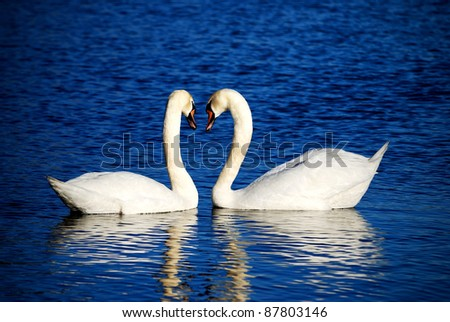 a couple of swans symbolizing heart sign