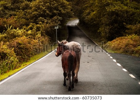 A couple of wild horses walking in a country road
