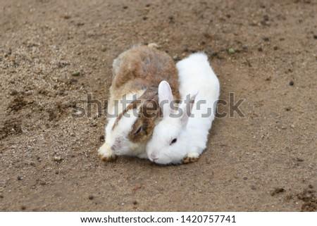 A couple rabbit cute cute #1420757741