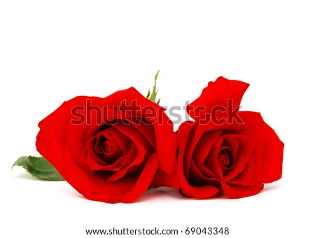 A couple red rose on gift