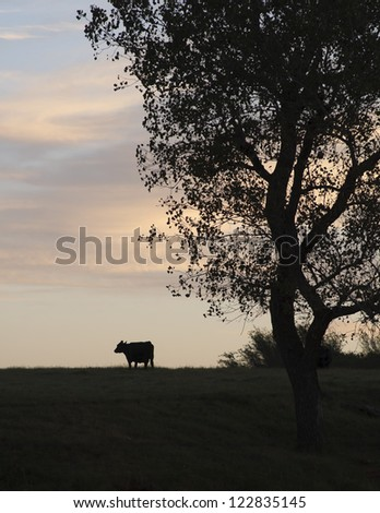 A cow and tree silhouetted against the sky at days end.