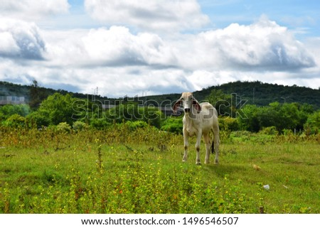 A cow is standing in the Meadow. #1496546507