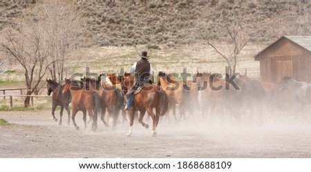 Photo of  A cowboy from the ZX ranch near Silver Lake, wrangling horses to be used for a roundup the following day.