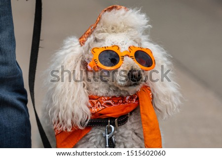 A Crazy Dog with Sunglasses Stock fotó ©