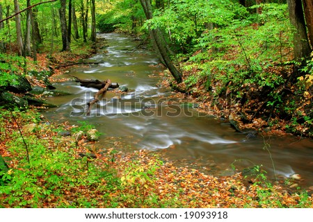 A creek deep in the forest during the start of fall colors.