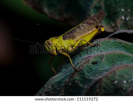 a cricket sitting on a green leaf