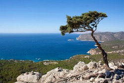 a crooked cypress tree growing atop a cliff in Rhodes top down view of the mediterranean sea