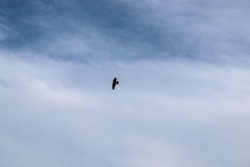 a crow flying in the sky
