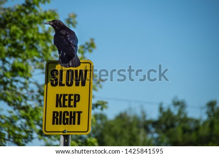 A crow standing guard, making sure people keep slow, and keep right