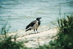 a crow stands on the banks of a river