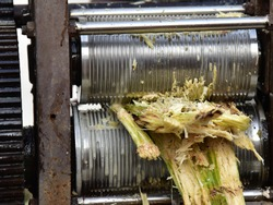 A crude mechanical devise to crush and extract juice from sugar cane. Bagasse after the extraction of cane juice.
