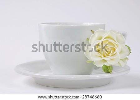 beautiful white rose flowers. Single White Rose Flower