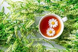 A cup of fragrant chamomile tea on a background decorated with juicy green wildflowers. Refreshing summer composition. Top view