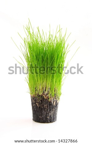 A cup of green grass and root isolated on a white background