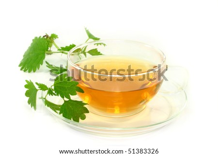 a cup of nettle tea with fresh nettles on a white background - stock photo