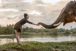 A cure girl softly touching the trunk of the elephant . Showing the lovely moment between human and elephant.