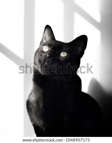 A curious black cat looks out at the world