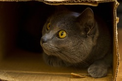 A curious cat peeks out from a cardboard box