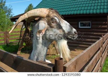 Sheep Eating In The Animal Pen Images and Stock Photos