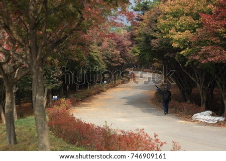 A curved trail with beautiful maple trees #746909161