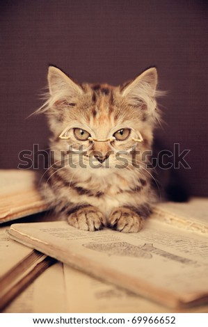 A cute adorable kitten wearing glasses reading a book! - stock photo