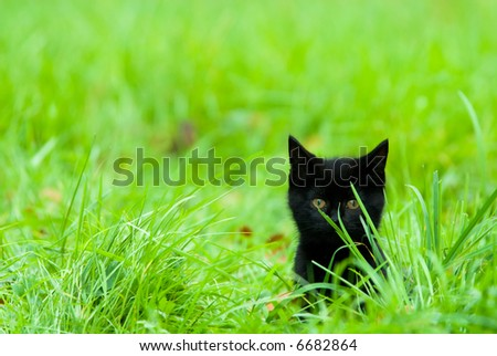 a cute black kitten in the grass