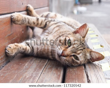 A cute cat  on a wooden bench
